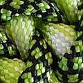 zelenáS-zelenobiela